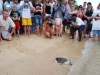 turtle-conservation-fiji-mes-fiji