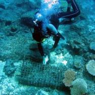 Reef Check Surveys