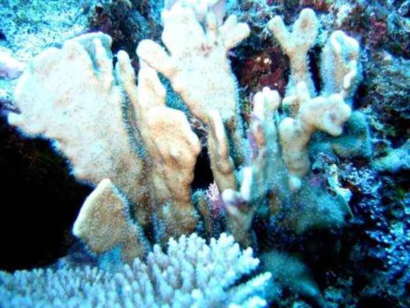 Post Cyclone Winston Reef Assessment