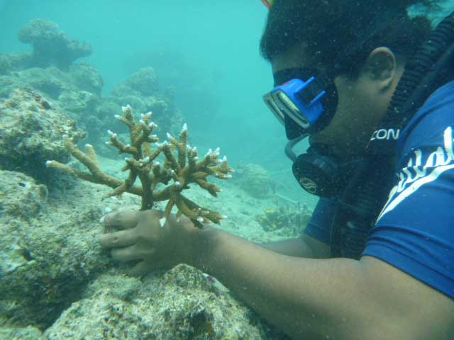 Reef Check Survey starts for member resorts.