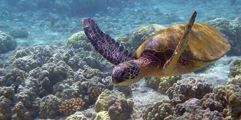 Turtle Project Resort Consultation Starts