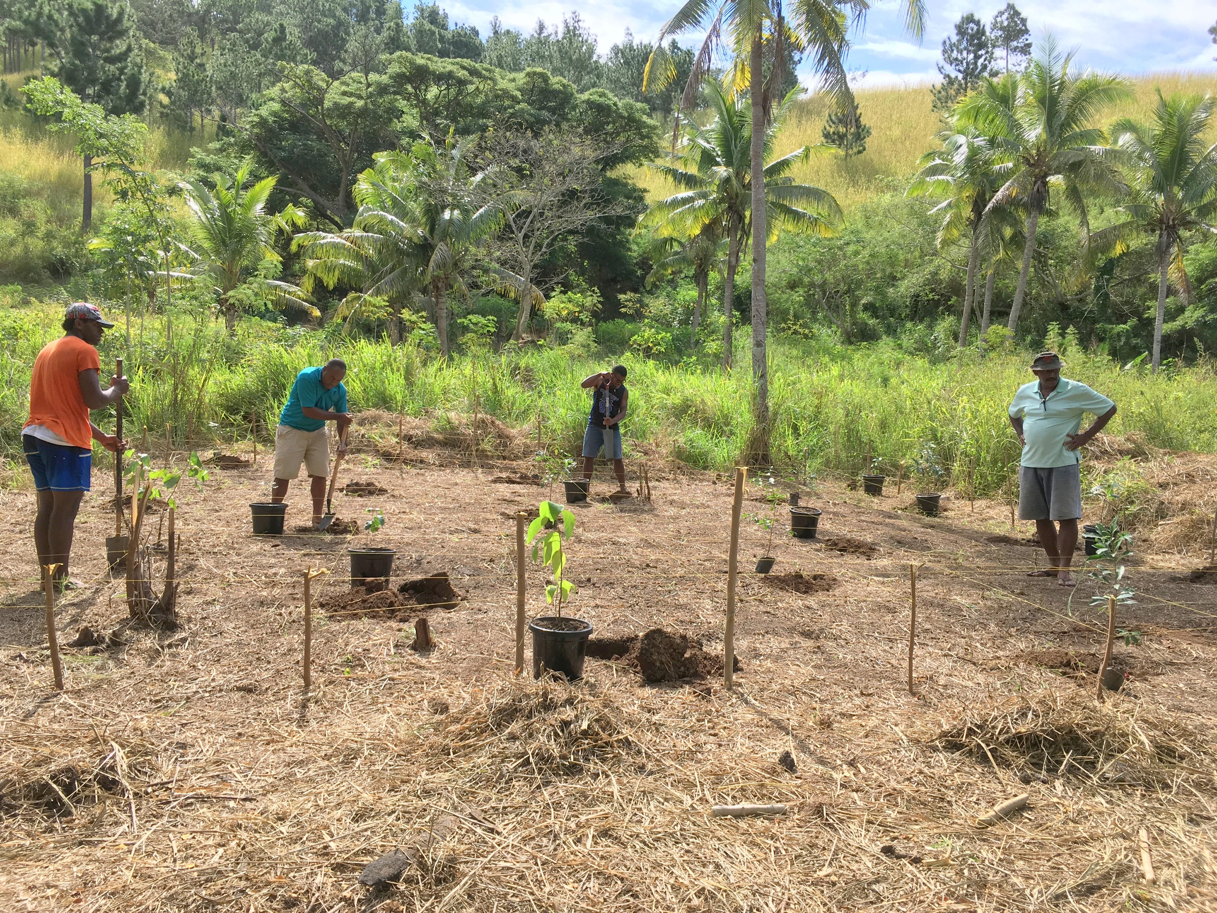 Fiji's Crested Iguana Perfect Habitat Prototype Established in Solevu Village