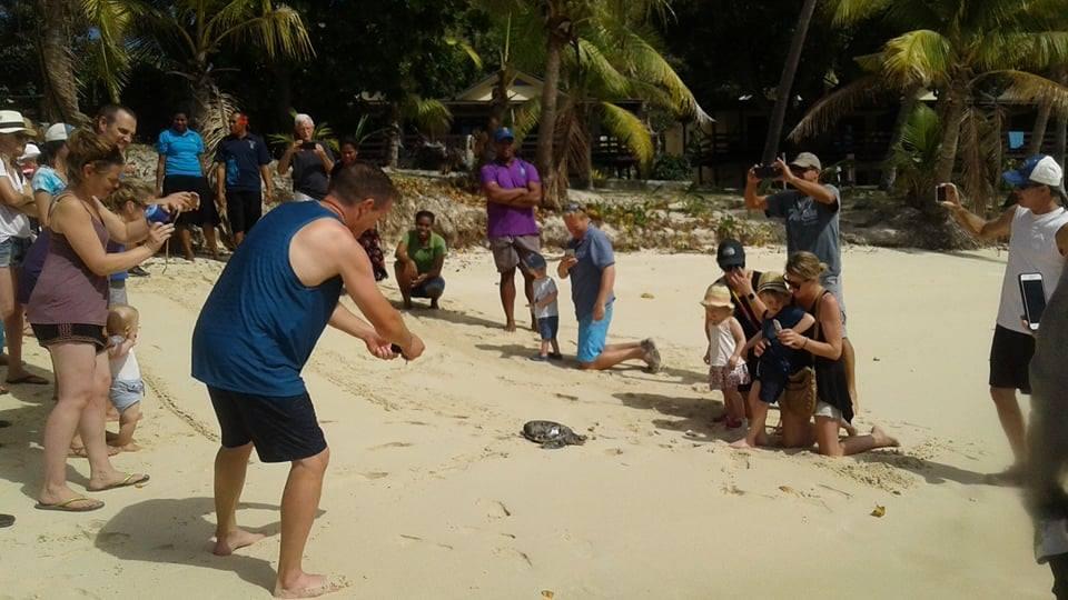 Survivor Entertainment Group Releases Turtles