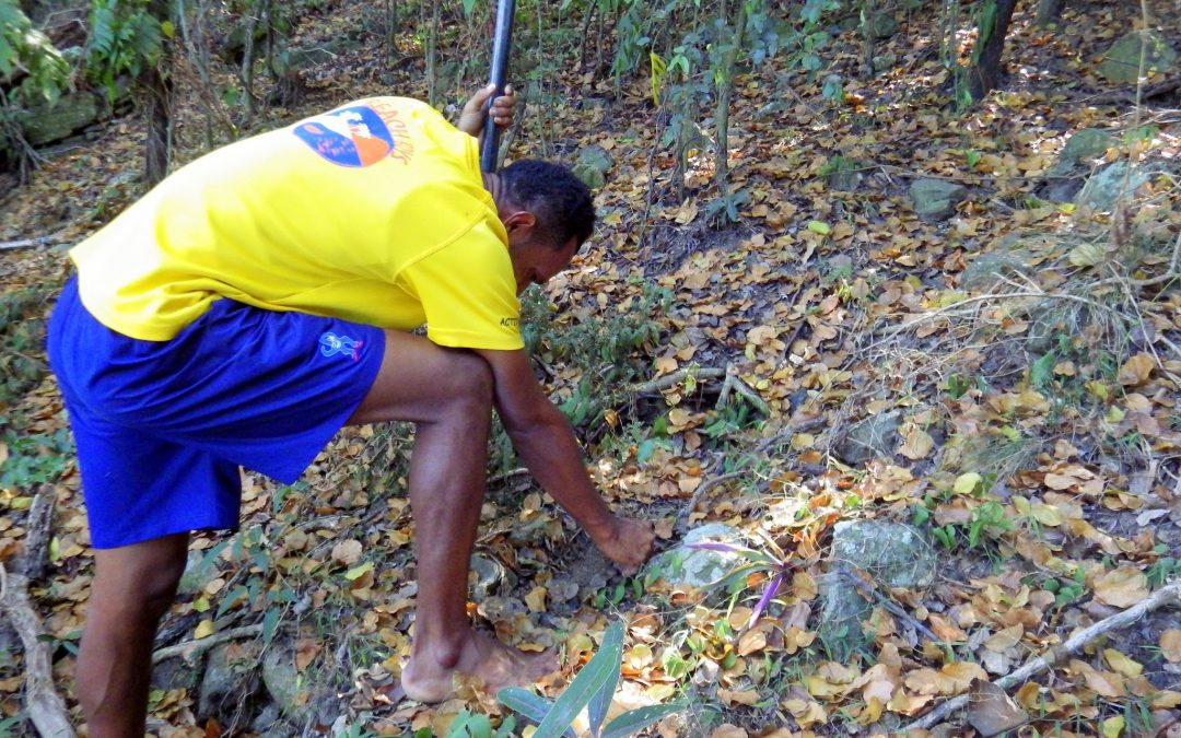 Resorts Partnership with MES on restoring the Dry Forest ecosystem in Malolo